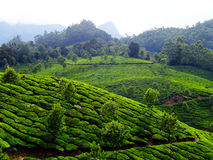 Colline del tè di Munnar Fotografie Stock Libere da Diritti