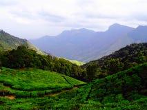 Colline del tè di Munnar Immagine Stock Libera da Diritti