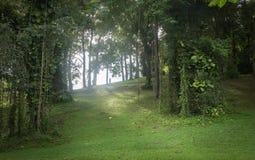 Colline dell'albero della vite e dell'erba Fotografia Stock