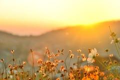 Colline dell'erba della Tailandia del Nord Fotografia Stock