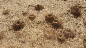 colline della formica del deserto Immagini Stock