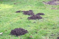 Colline della talpa nell'erba o nel prato inglese Fotografie Stock Libere da Diritti