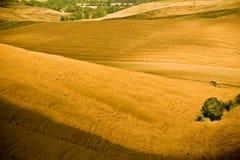 Colline della Toscana nel colore giallo Fotografia Stock