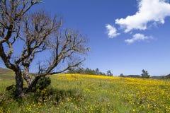 Colline des fleurs jaunes de souci Images stock