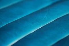 Colline di cuoio blu Fotografie Stock