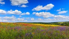 Colline di fioritura fantastiche di giorno soleggiato alla luce solare calda Fotografia Stock