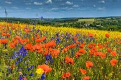 Colline di fioritura fantastiche di giorno soleggiato alla luce solare calda nel giorno di estate Fotografia Stock