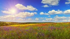 Colline di fioritura fantastiche di giorno soleggiato alla luce solare calda nel giorno di estate Fotografie Stock Libere da Diritti
