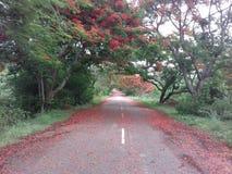 Colline di Horsley, Andhra Pradesh, India fotografia stock libera da diritti