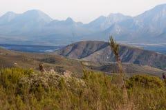 Colline e montagne vicino alla baia di Mossel Fotografie Stock Libere da Diritti