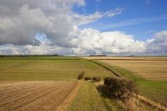 Colline e siepi di arbusti dei wolds di Yorkshire Immagine Stock