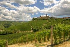 Colline e vigne del Piemonte, Italia. Fotografia Stock Libera da Diritti