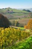 Colline e wineyards dei pascoli a Robaje - il Croatia Fotografie Stock Libere da Diritti