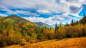 Colline ed alberi di autunno con cielo blu e luce solare Immagine Stock