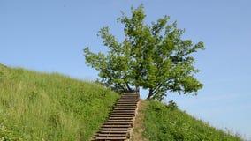 Colline en bois d'escaliers banque de vidéos