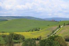Colline gialle del seme di ravizzone con i cipressi ed i prati verdi immagine stock