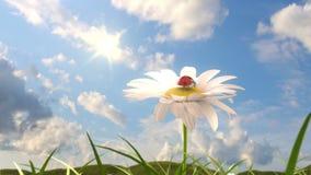 Colline herbeuse avec la camomille et la coccinelle illustration de vecteur