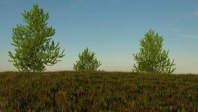 Colline herbeuse avec trois arbres la montrant de fini Photos stock
