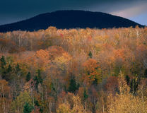 Colline a nord della gamma presidenziale, foresta nazionale della montagna bianca, New Hampshire Immagine Stock Libera da Diritti