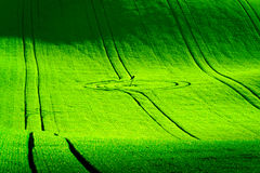 Colline ondulate verdi in Moravia del sud Fotografia Stock