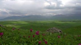Colline pedemontana di fioritura della primavera Rivestimenti di tempo video d archivio