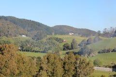 Colline, prati e cespuglio su un allevamento di pecore della Nuova Zelanda Fotografia Stock Libera da Diritti