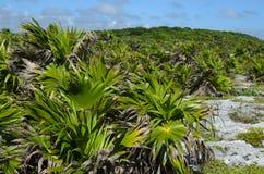 Colline rocheuse verte couverte de petits palmiers Photo stock