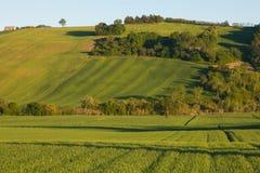 Colline rurali verdi tipiche della regione della Marche Immagini Stock Libere da Diritti