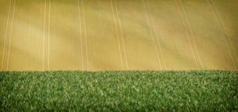 Colline soleggiate di rotolamento con i campi ed alberi adatti ad ambiti di provenienza o a carte da parati, paesaggio stagionale immagine stock libera da diritti