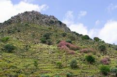 Colline sull'isola di Creta, Grecia Fotografia Stock