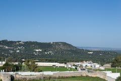 Colline verdi coperte di olive fotografia stock libera da diritti