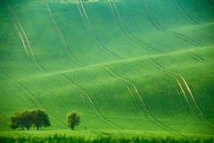 Colline verdi della molla Terreni arabili in Ceco Moravia Fotografie Stock