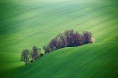 Colline verdi della molla Terreni arabili in Ceco Moravia Immagini Stock