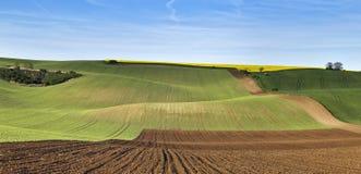 Colline verdi della molla Terreni arabili in Ceco Moravia Immagine Stock