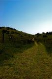 Colline verdi e cielo blu Fotografia Stock