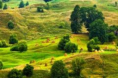 Colline verdi Haymows di estate sul prato Fotografie Stock