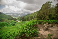 Colline verdi sulla piantagione di tè con le montagne nel fondo sotto i cieli scenici fotografie stock