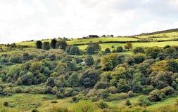 Colline verdi vicino a Belfast - l'Irlanda del Nord Immagine Stock