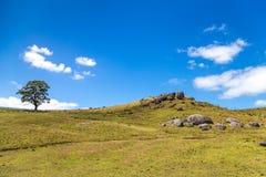 Colline verte avec un arbre simple et des roches volcaniques Image stock