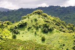Colline verte envahie avec une forêt tropicale verte tropicale luxuriante près de la ville de Savusavu de Fijian, île de Vanua Le photographie stock libre de droits
