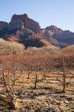 Colline Zion National Park Desert Southwest dell'alta montagna di alba fotografia stock libera da diritti