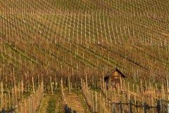 Collines allemandes d'établissement vinicole Photos libres de droits