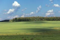 Collines avec l'herbe et la forêt photo stock