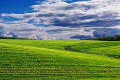 Collines avec l'herbe et la forêt image stock