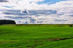 Collines avec l'herbe et la forêt images libres de droits