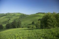 Collines avec l'herbe et les arbres Photographie stock libre de droits