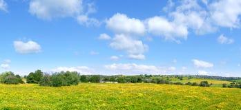 Collines avec l'herbe et les fleurs jaunes Photos stock