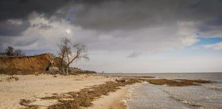 Collines d'arbre de mer de plage Photos libres de droits