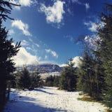 Collines d'hiver Photo libre de droits