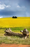 Collines de Canola Images stock